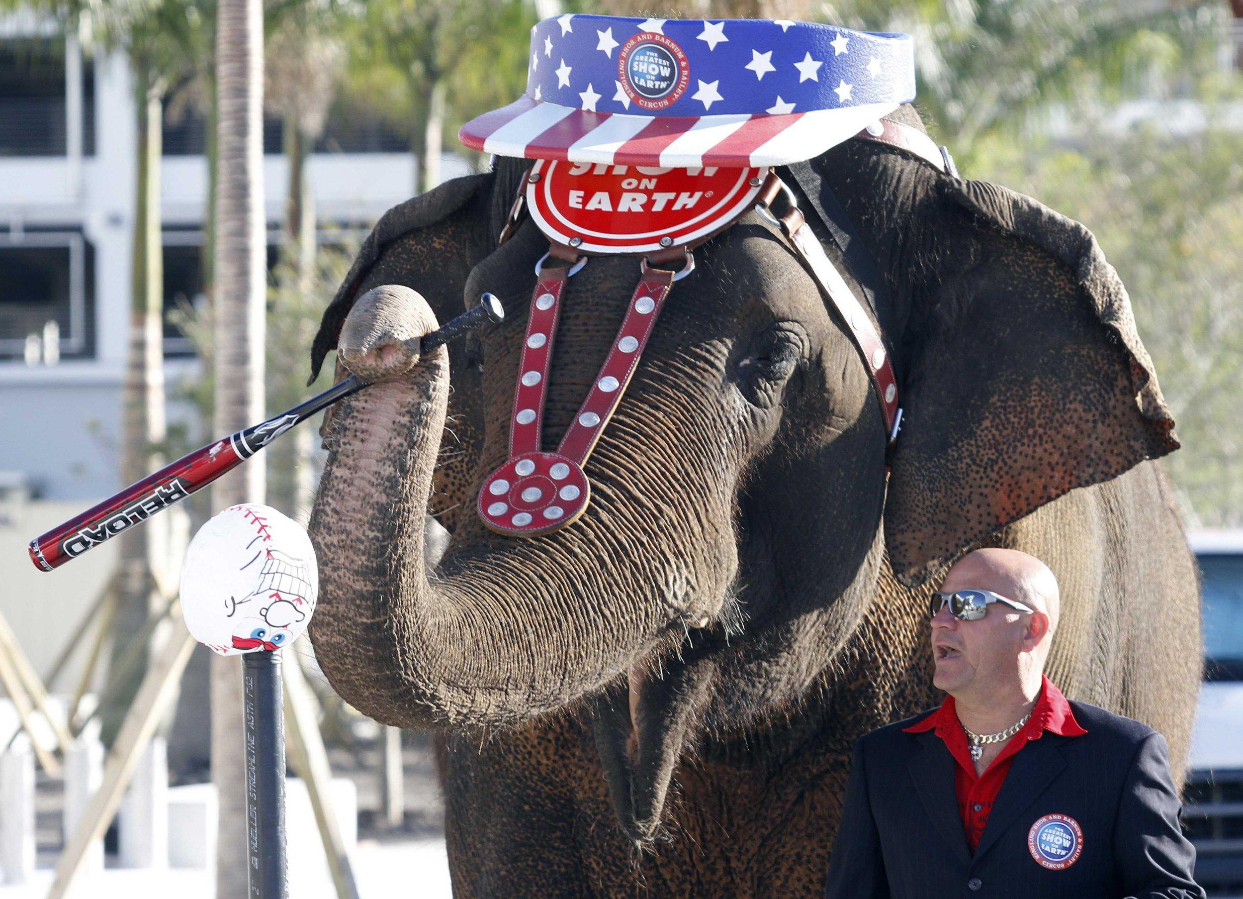 2015-03-05T145420Z_245160021_GM1E8160K8501_RTRMADP_3_USA-CIRCUS-ELEPHANTS