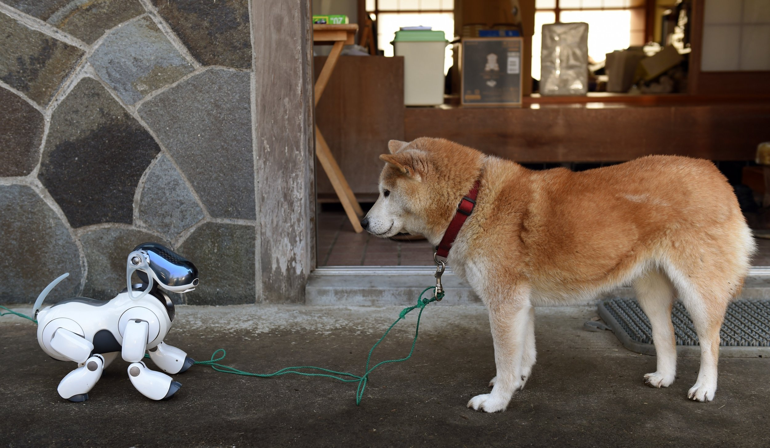 Japan's Robot Dogs Get Funerals as Sony Looks Away