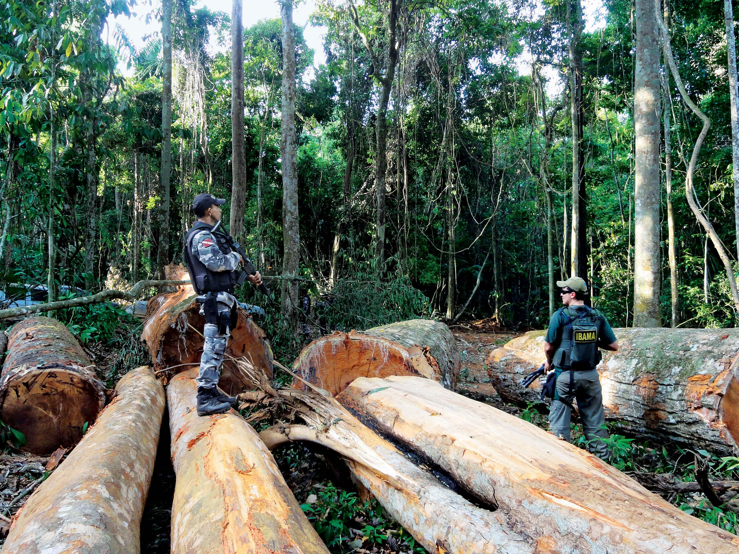 Brazil's Deforestation Rates Are on the Rise Again