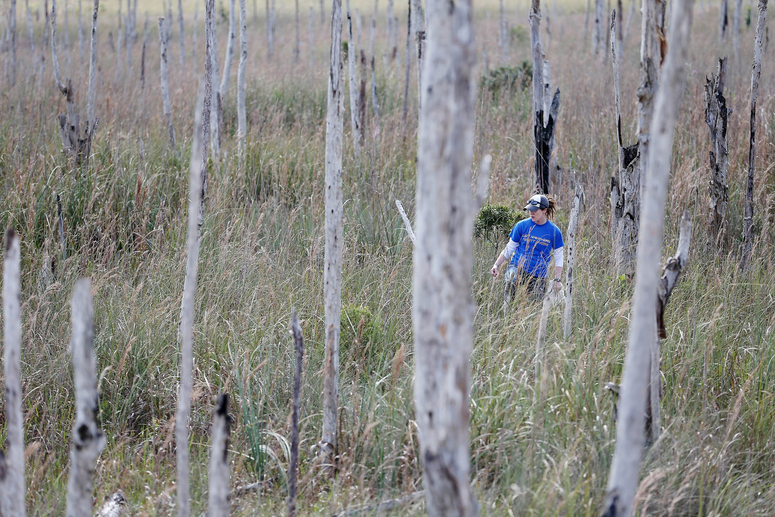 For Florida Indian Tribes Everglades Bike Path A Threat