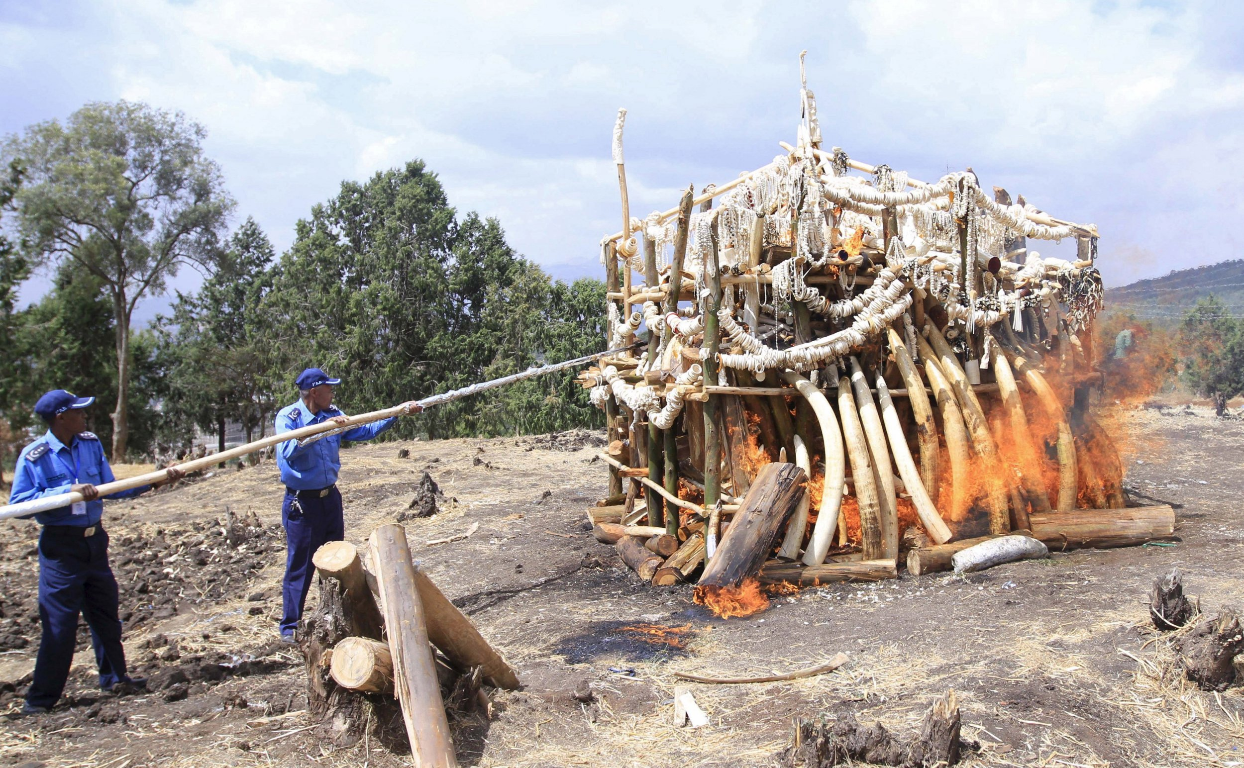 6.1 tonnes of ivory is set alight in Ethiopia's capital Addis Ababa.