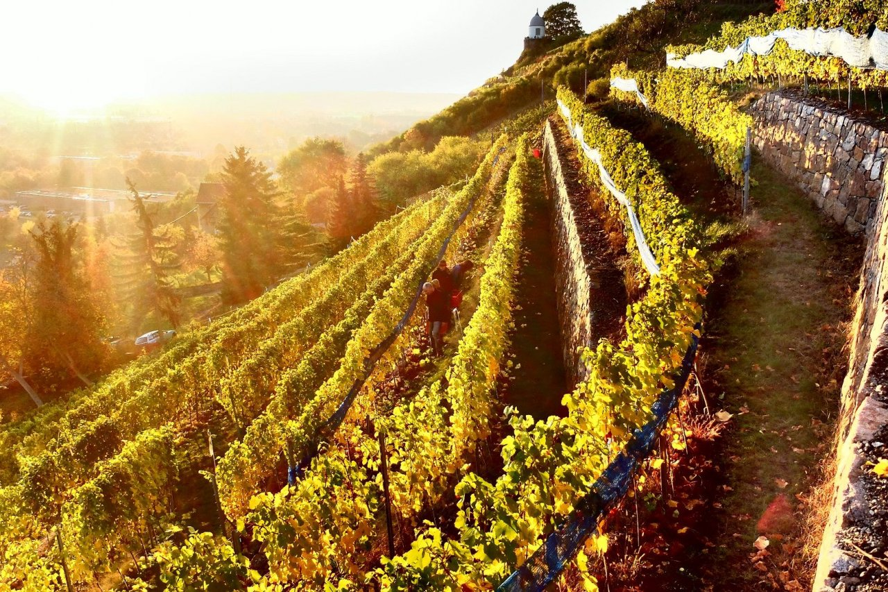 EB_Italian wine in Saxony_Martin Schwarz's vineyard 2_photo credit Martin Schwarz