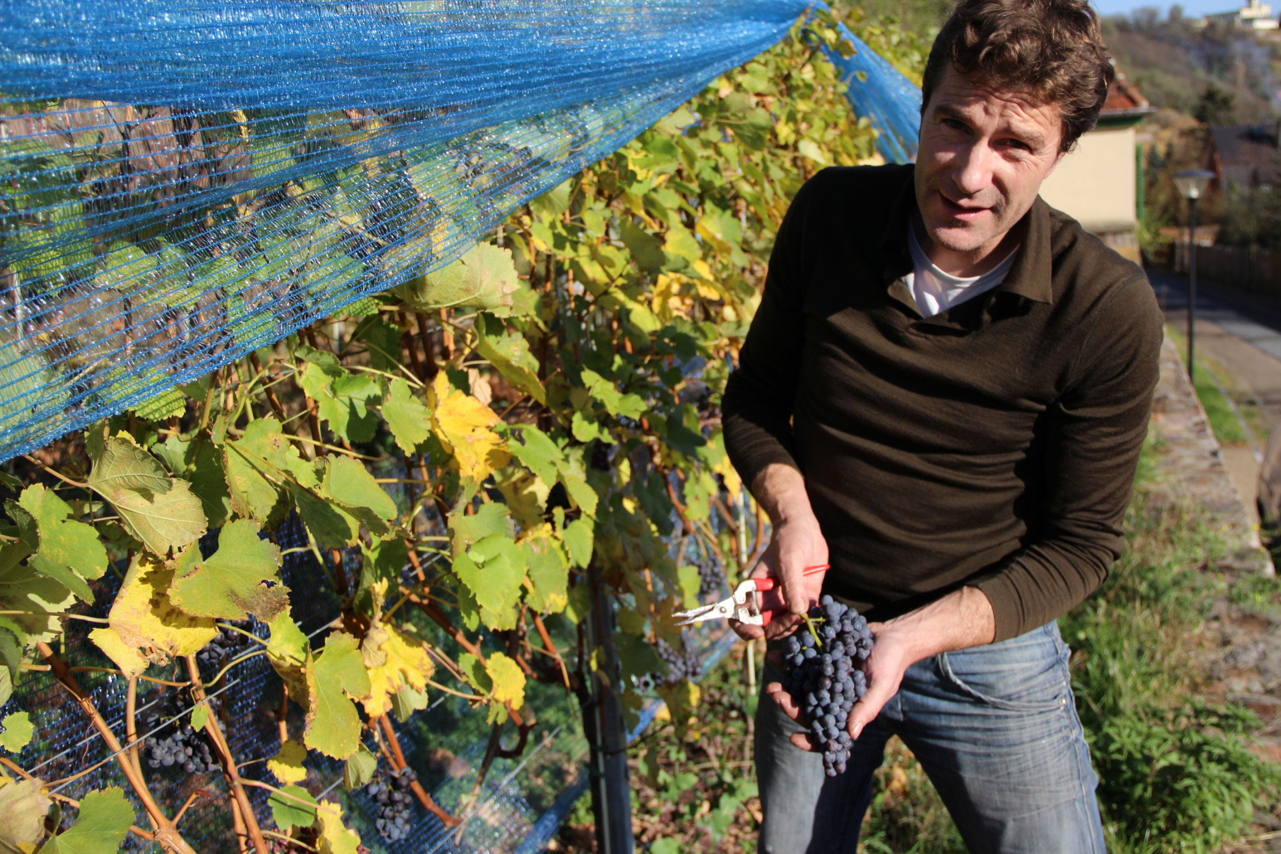 EB_Italian wine in Saxony_Martin Schwarz with his grapes_photo credit Martin Schwarz