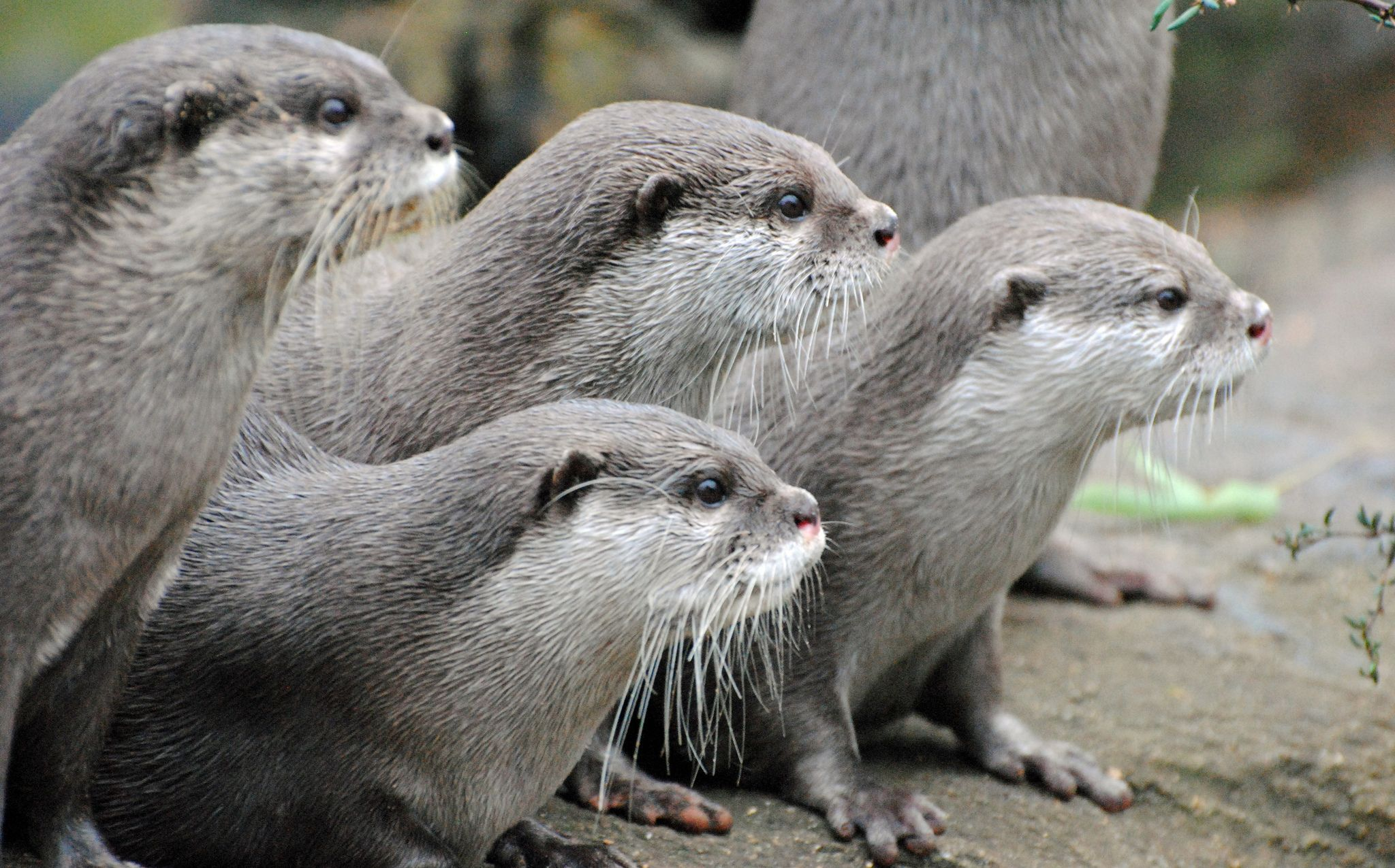 Government killed 454 otters