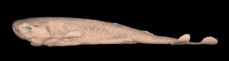 Molisquama with skin