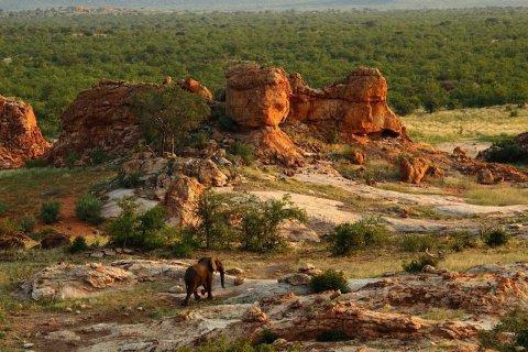 Elephant Touran Reddaway
