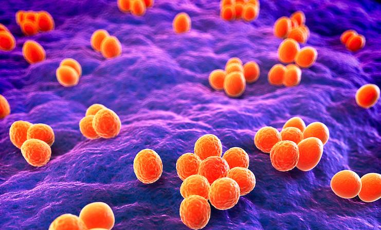 bacteria-close