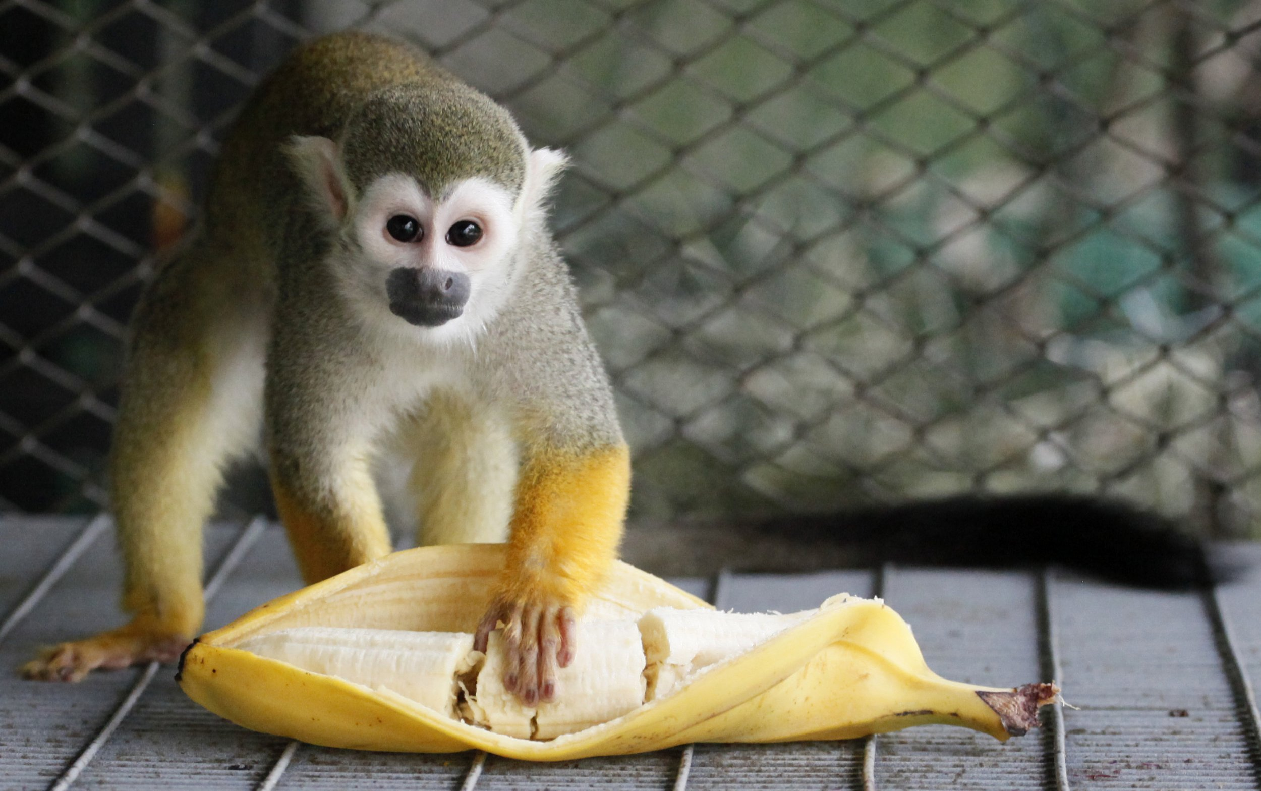 A Cure For Color Blindness That Isn T Just Monkey Business
