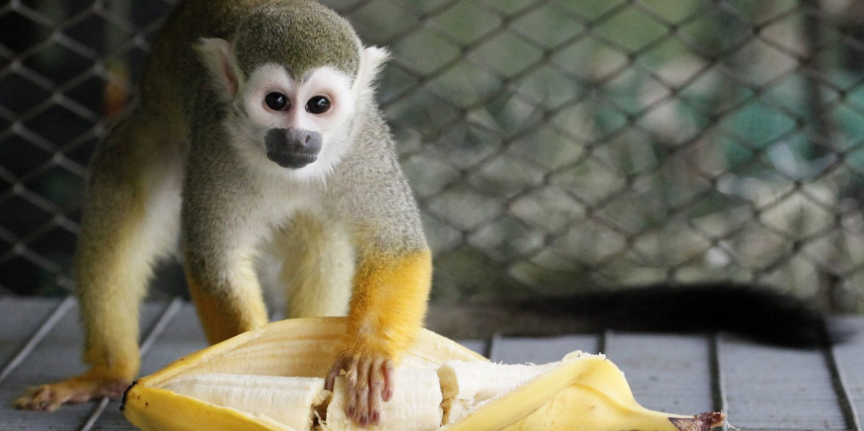 monkey_0510