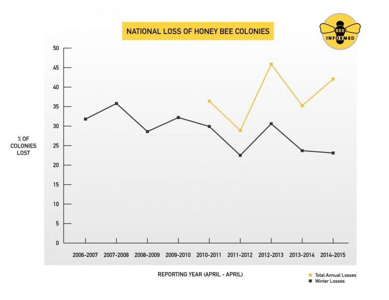honeybee-losses