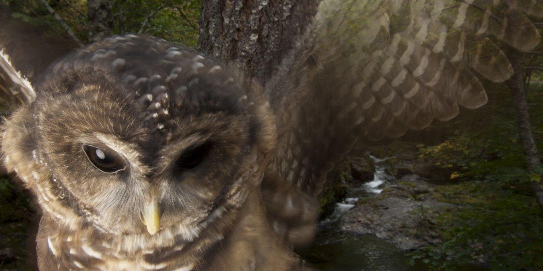 05_22_Owls_01