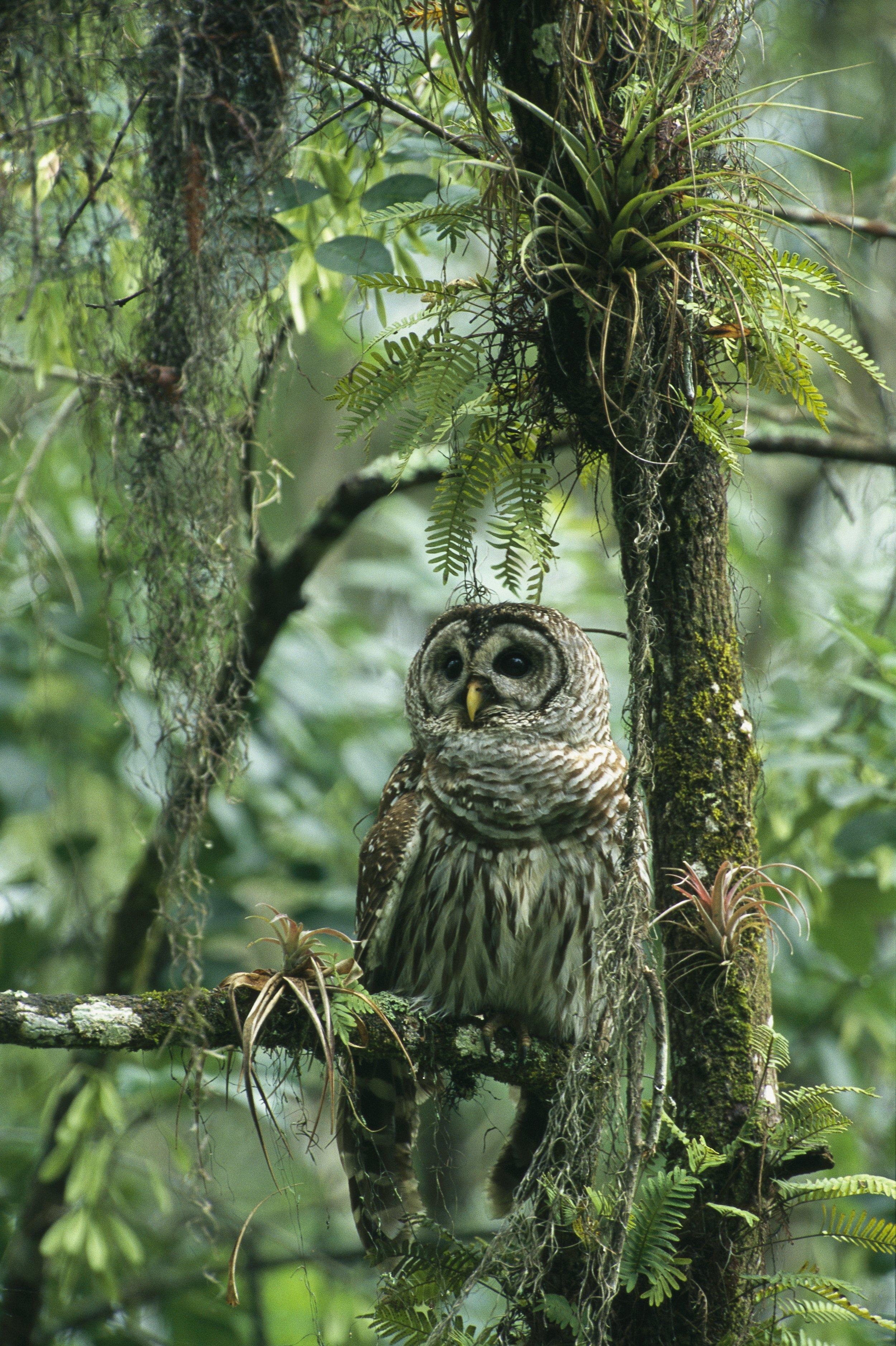 05_22_Owls_02