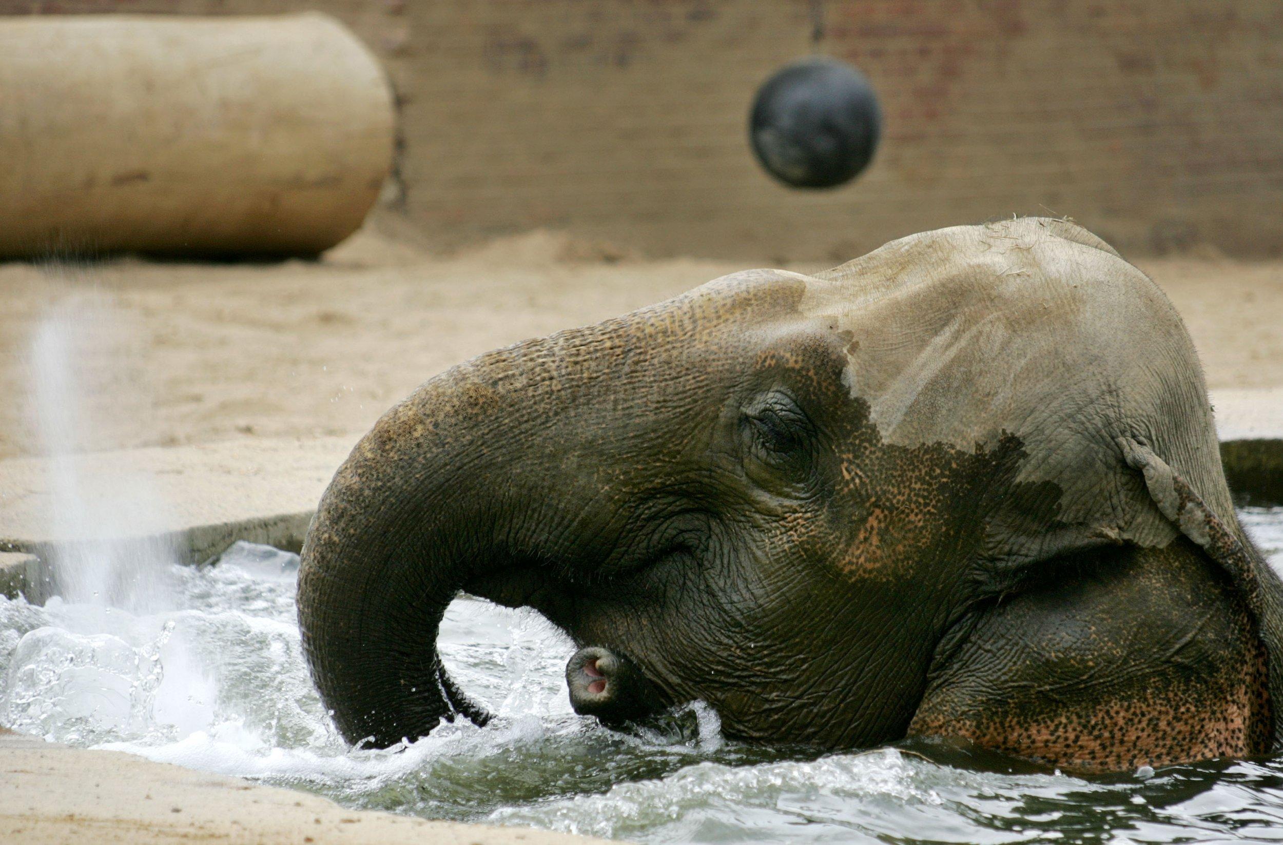 elephant_0517