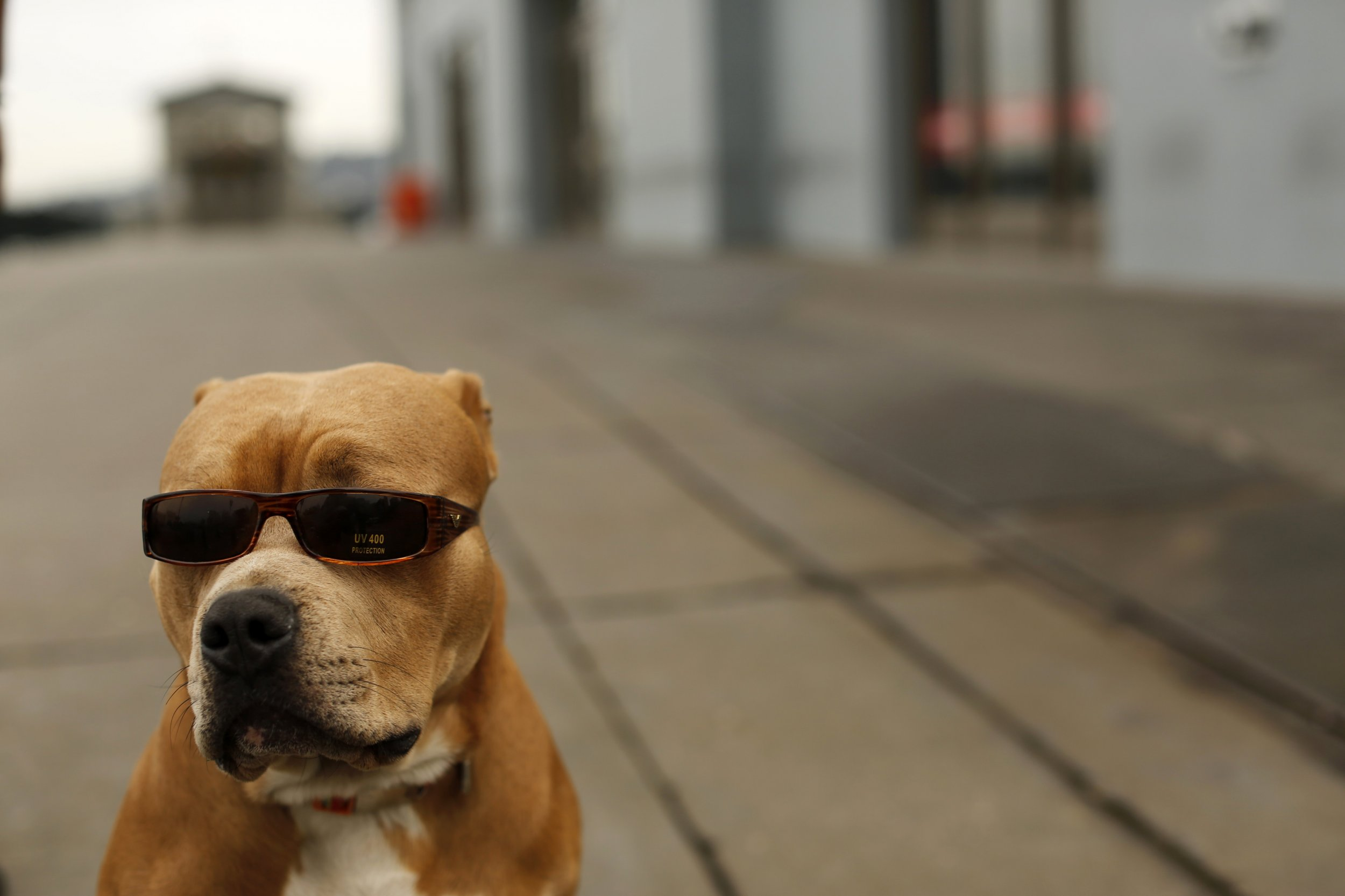 Study Dogs Have Been Close With Humans For Around 30 000