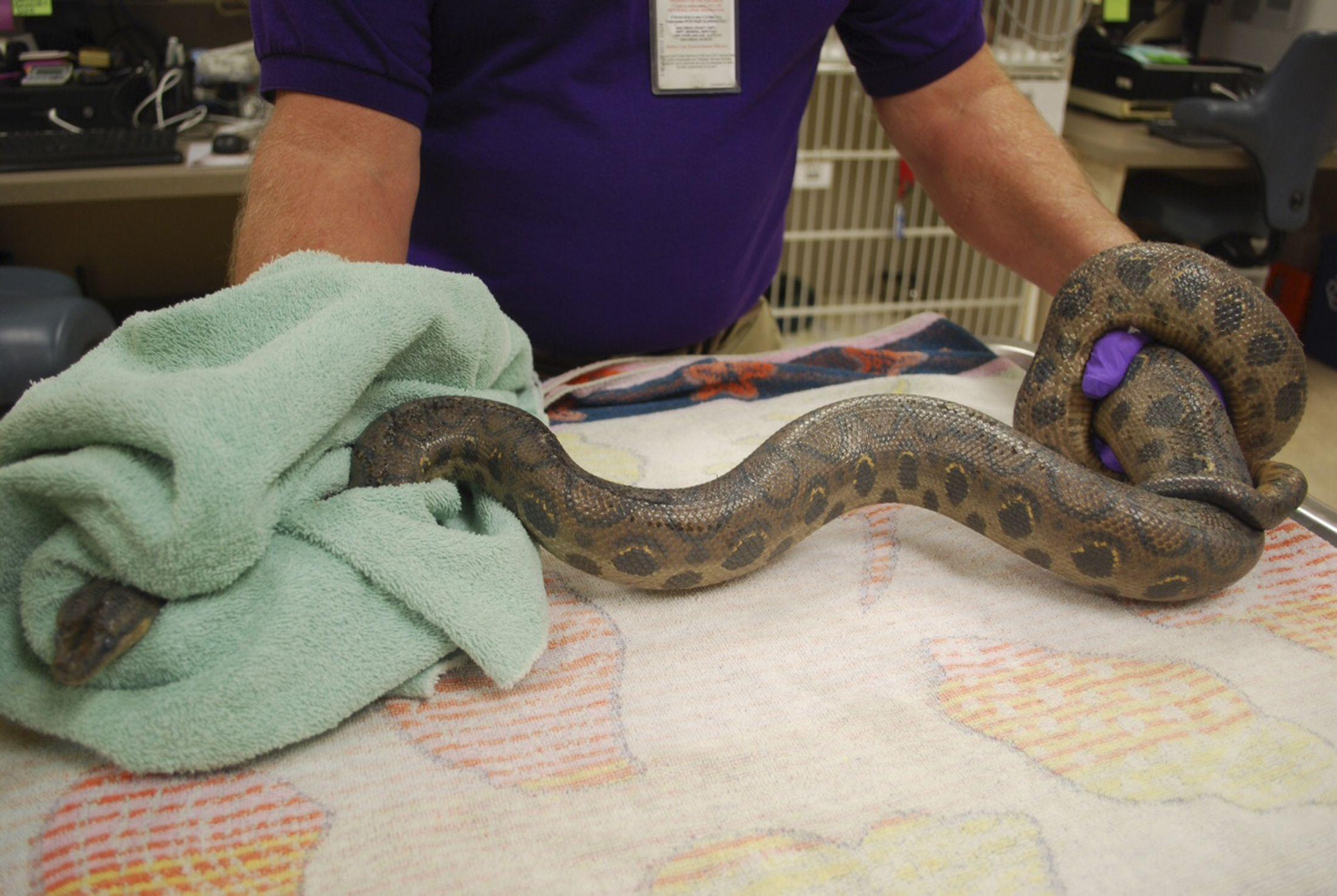 0528_snake