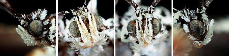 moth_heads_pinkaew_1