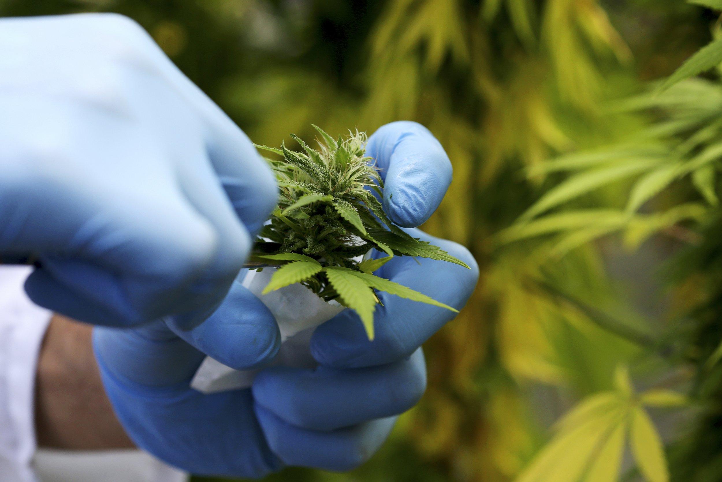 0529_medical_marijuana