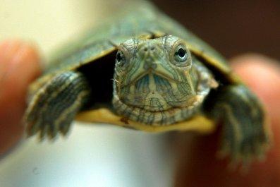 06_05_Turtles_01