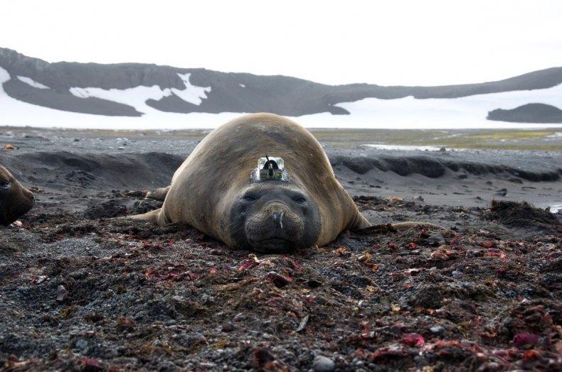 Seal 3