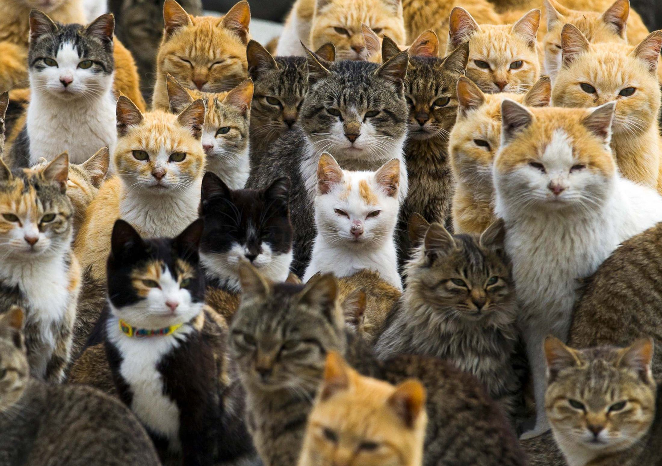 Toxoplasmosis in cats: is it dangerous