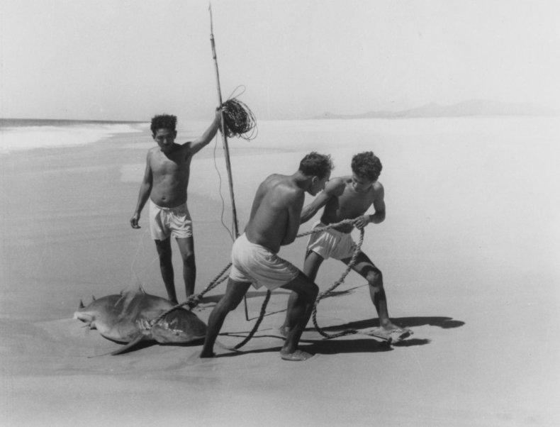 Tiburoneros