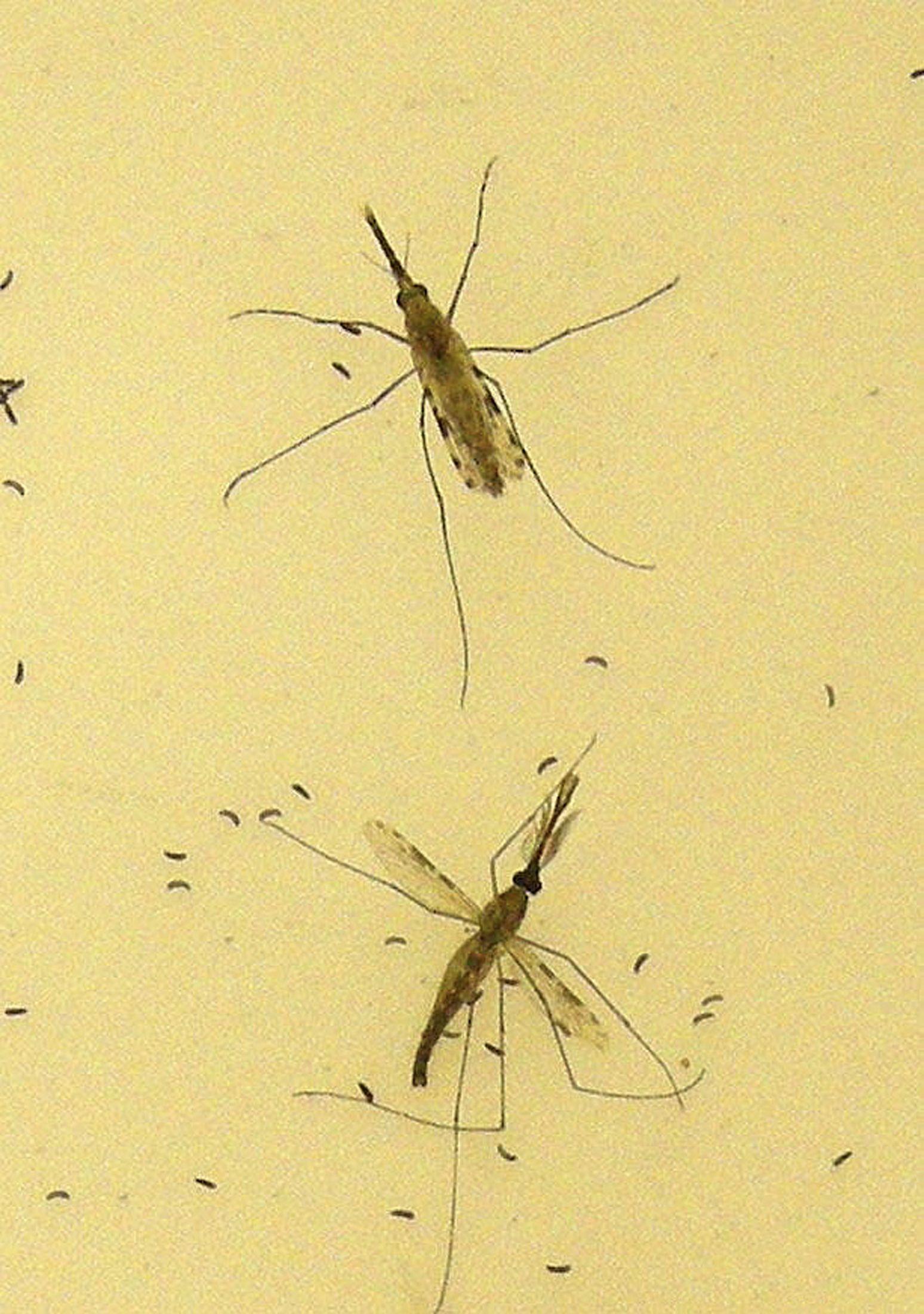 0617_malaria