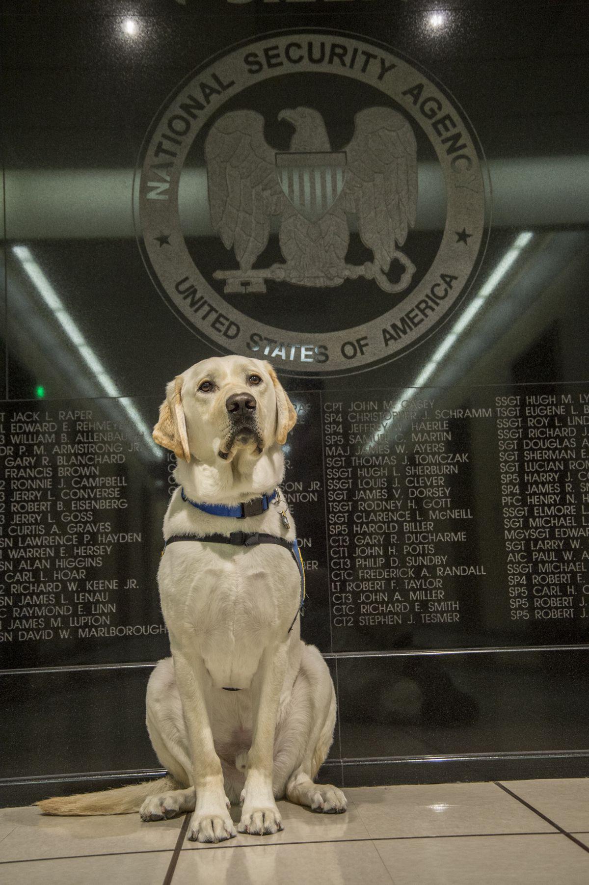 Puppy NSA