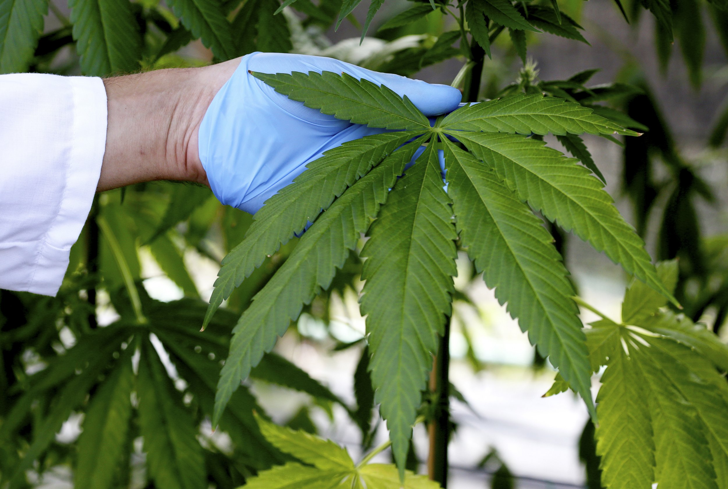 0708_medical_marijuana