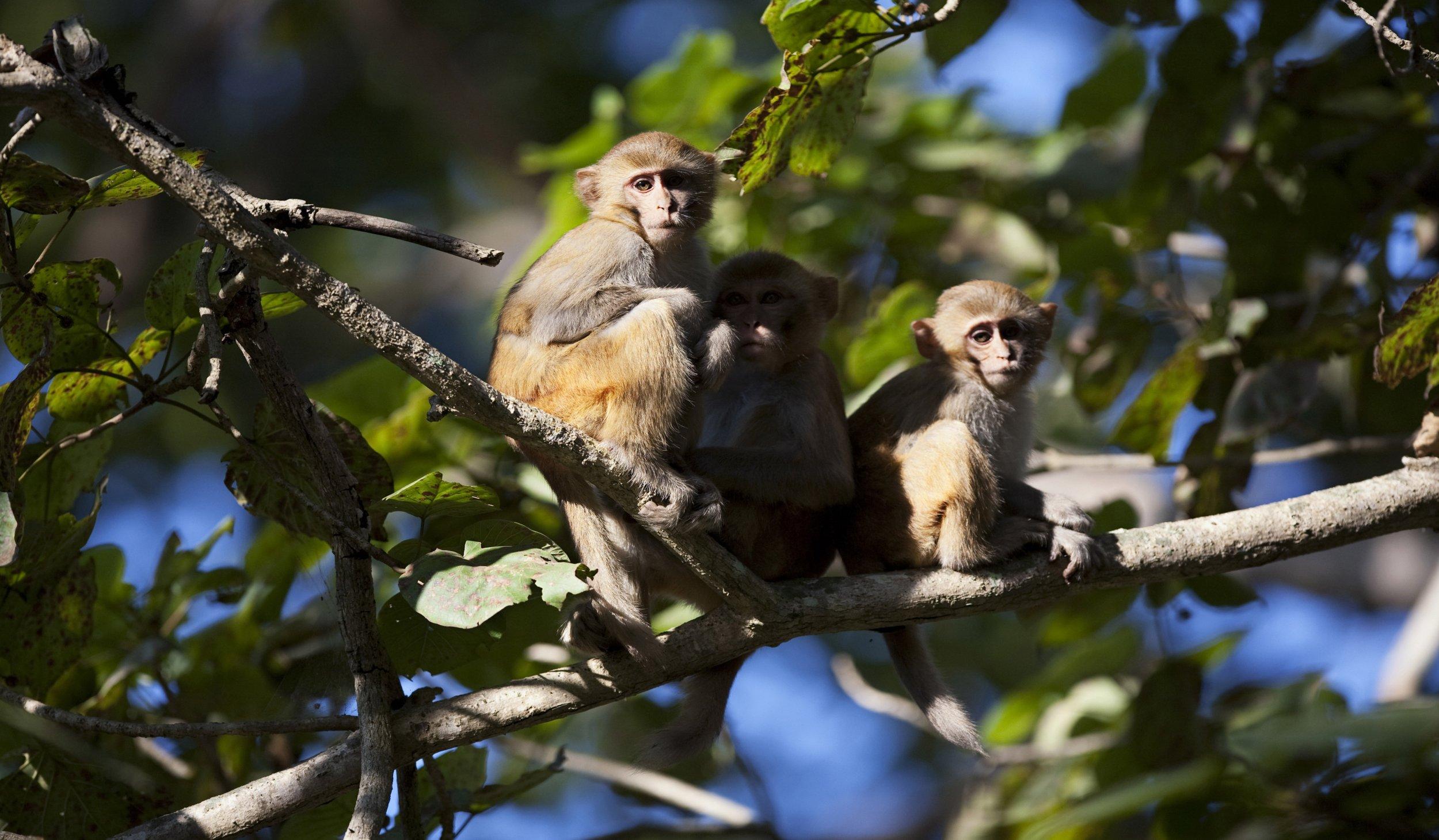 MonkeysWEB
