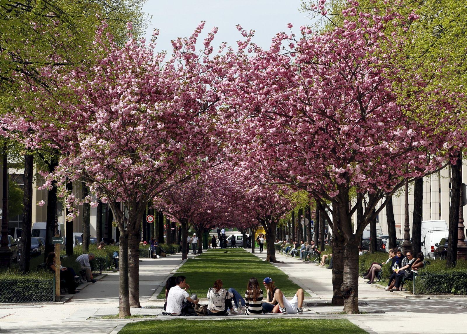 Urban trees health benefits