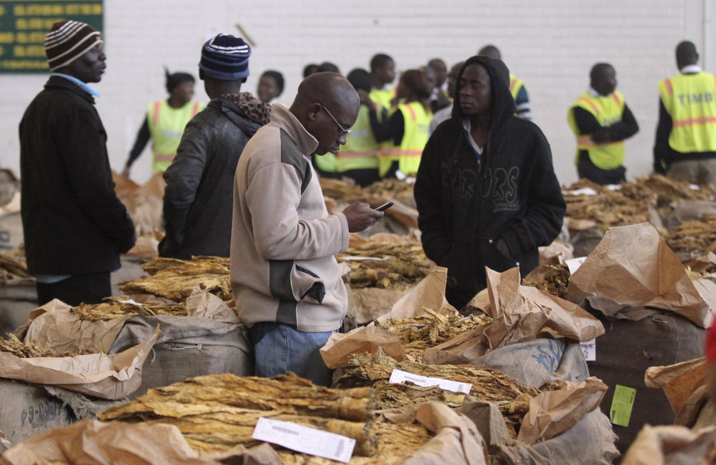 Zimbabwe Farmers Fear A Hungry Winter After Poor Tobacco Crop