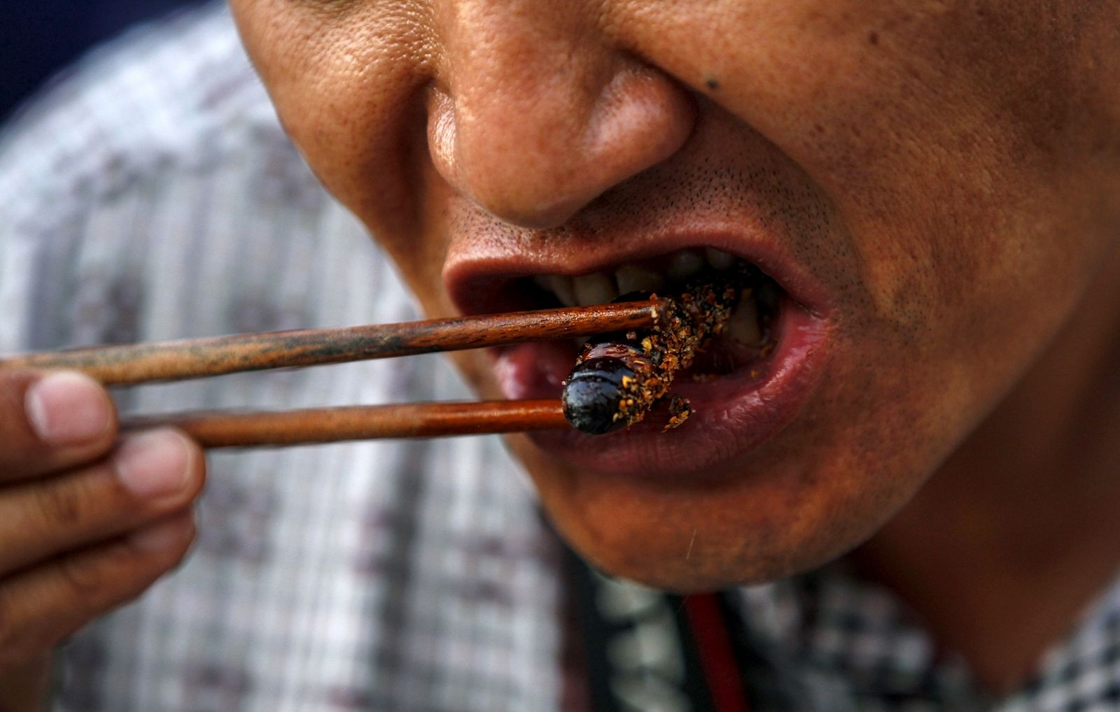 Edible Insects EU Regulations