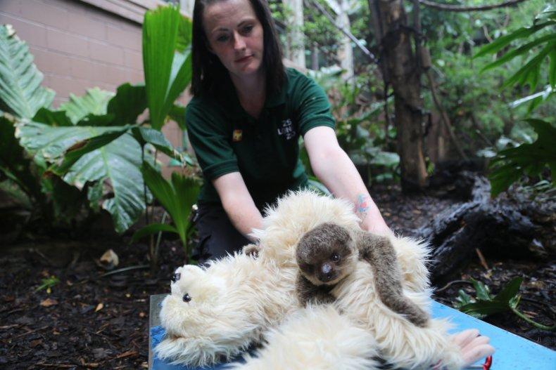 Edward sloth
