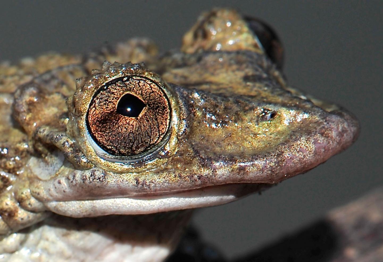 Greenings-frog