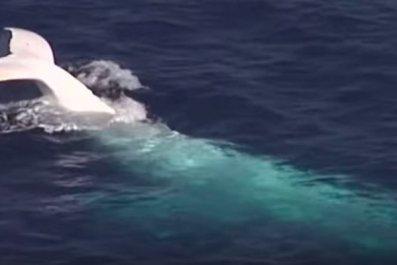 white-whale-use