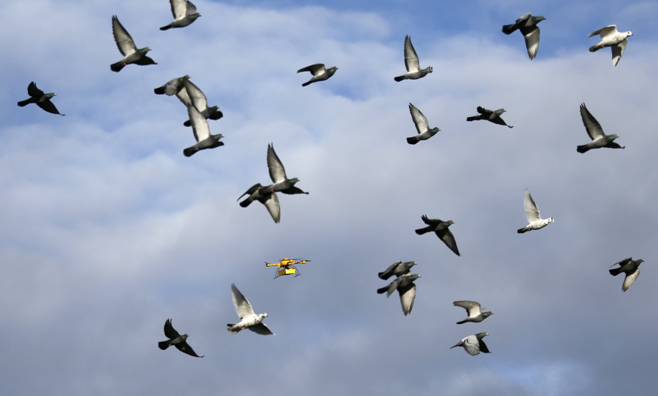 Birds and drones