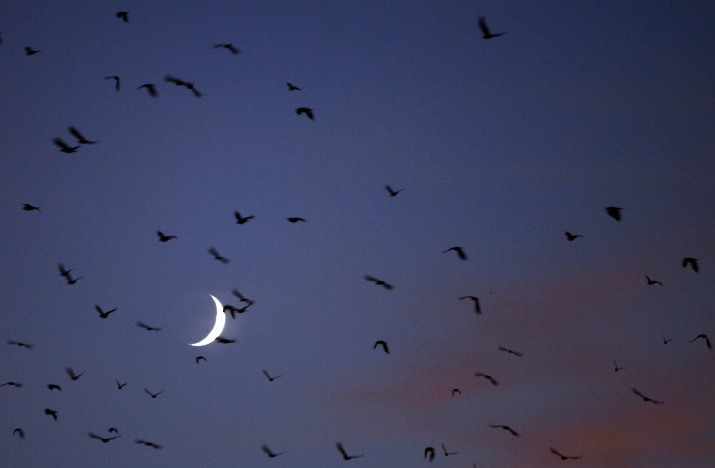 0813_Crows_Moon