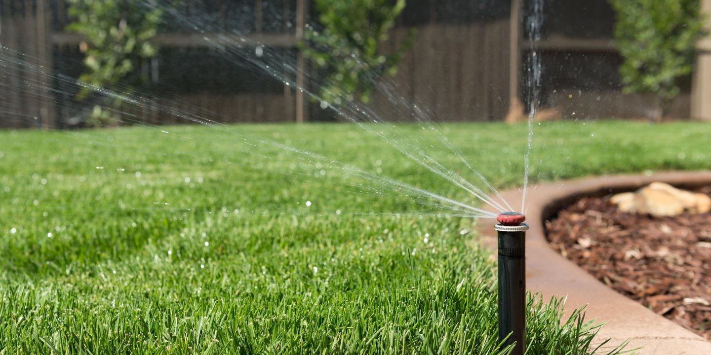 Grass That Doesn't Need Water Could Keep California Green