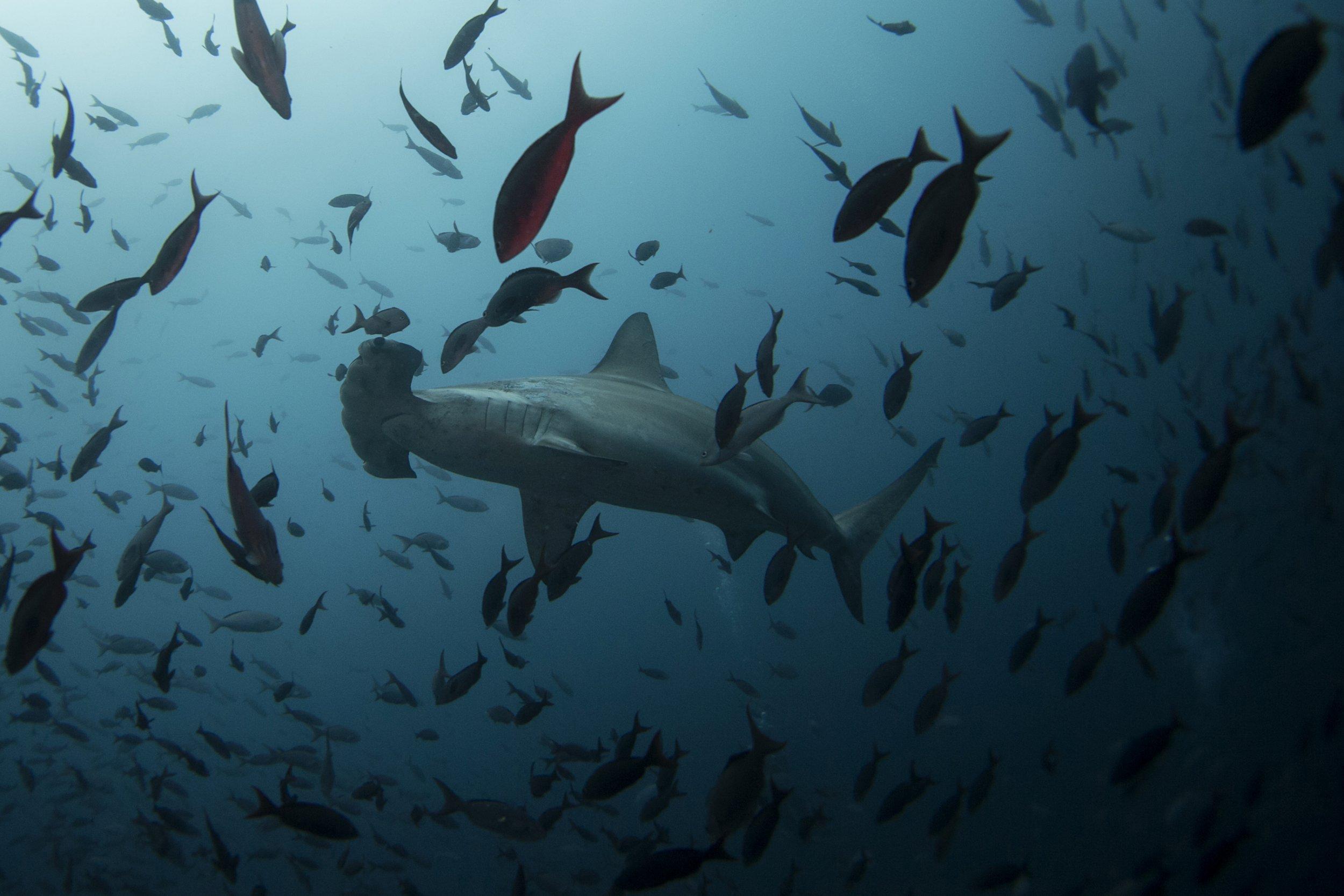 8/30_Paula_Shark