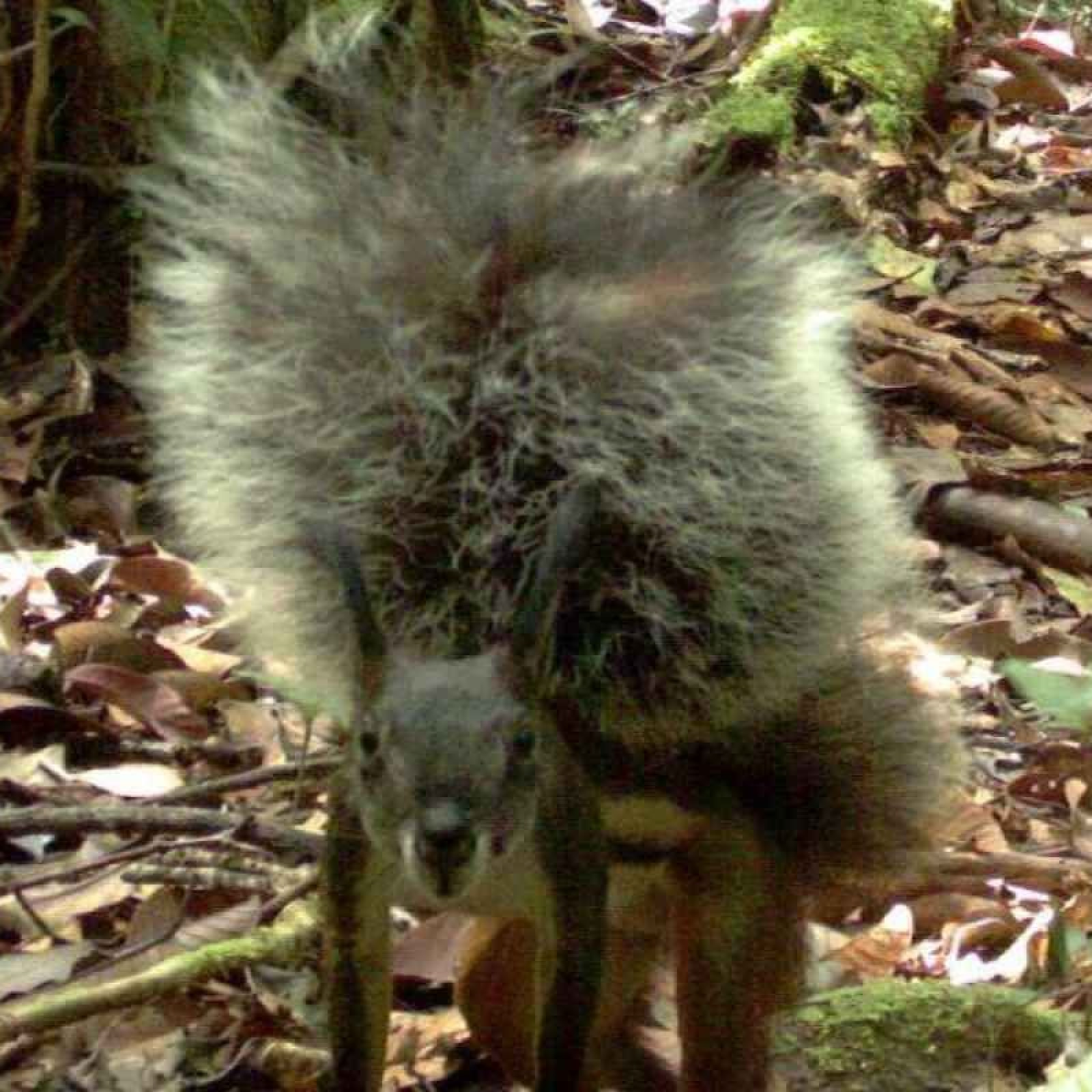 First Video of Vampire Squirrel Revealed