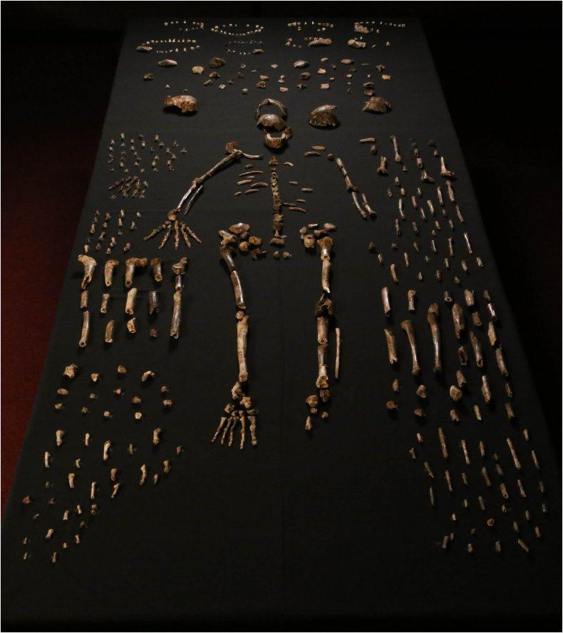 homo-naledi-full-skeleton