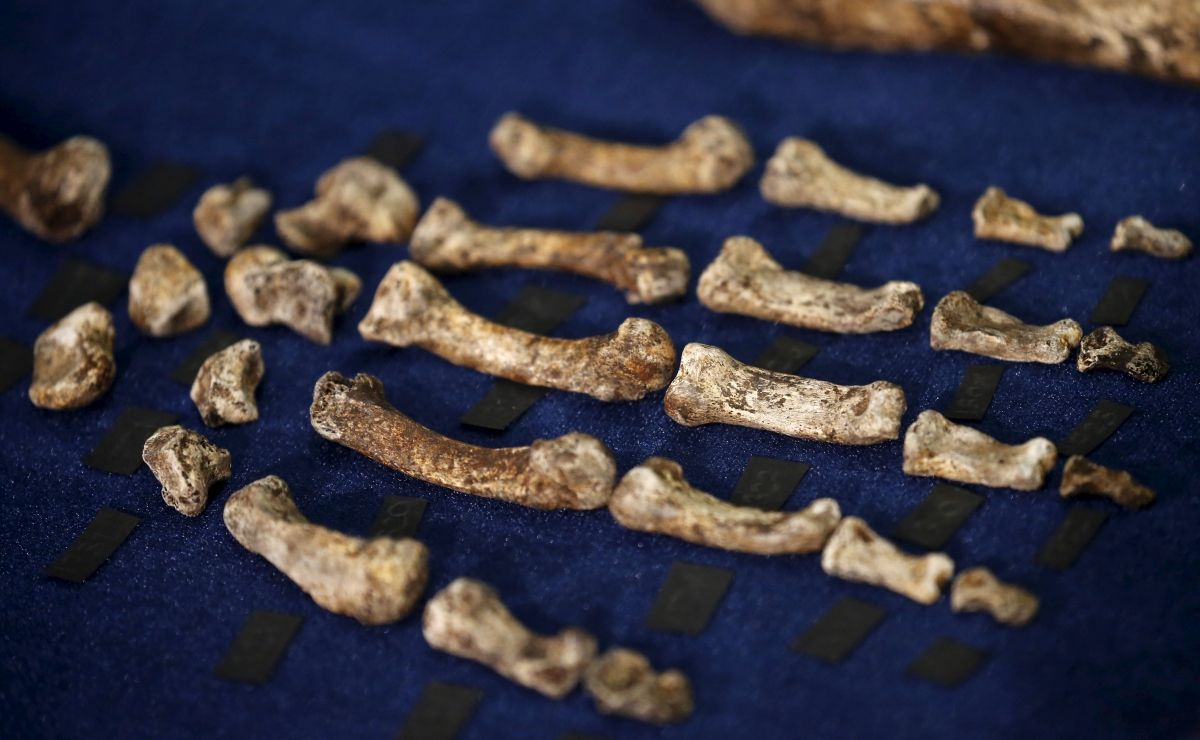 Homo naledi discovery