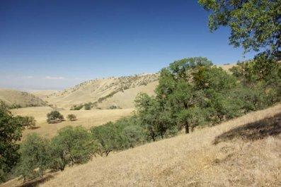 9-14-15 Snowpack blue oaks