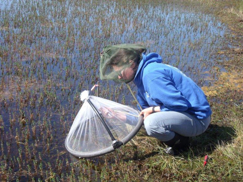 lauren-culler-mosquitoes