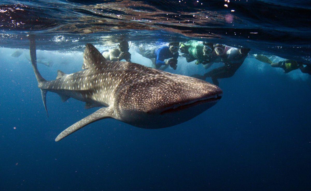World Wildlife Fund marine report