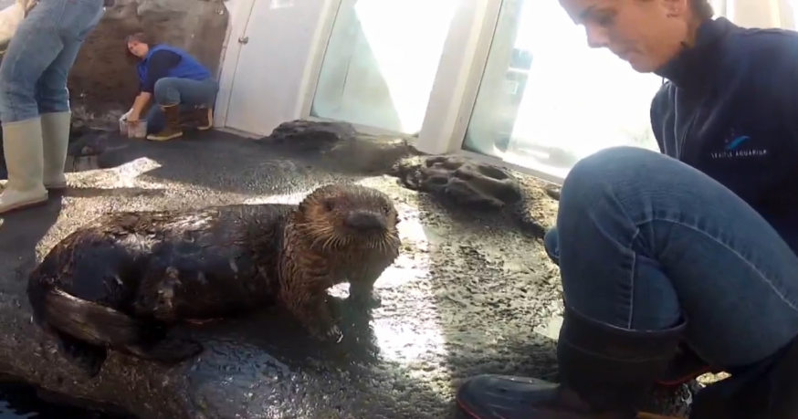 Mishka the inhaler otter