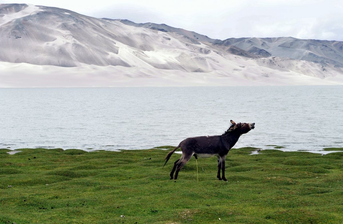 Ig Nobel Awards 2015: How Long Do Mammals Take to Pee?