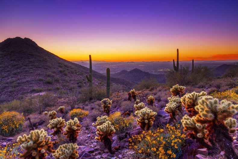 McDowell Sonoran Purple