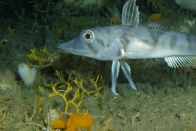 fish-bryozoans