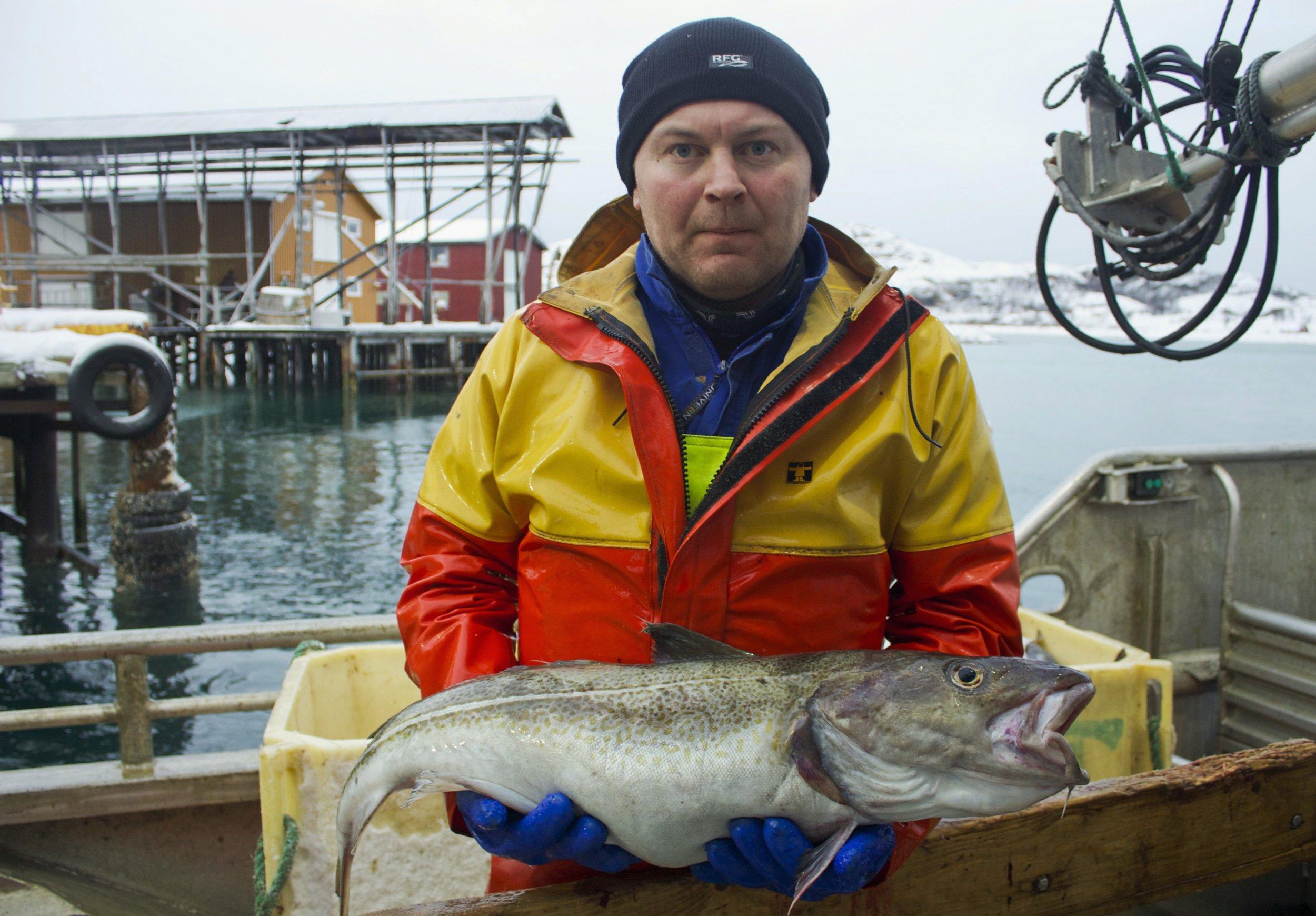 north-sea-cod